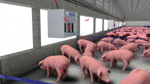 LB White Forced Air Swine video China UPDATE_02267